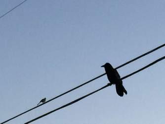 Big Bird Little Bird 2